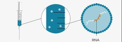 Explicação do RNA do vírus
